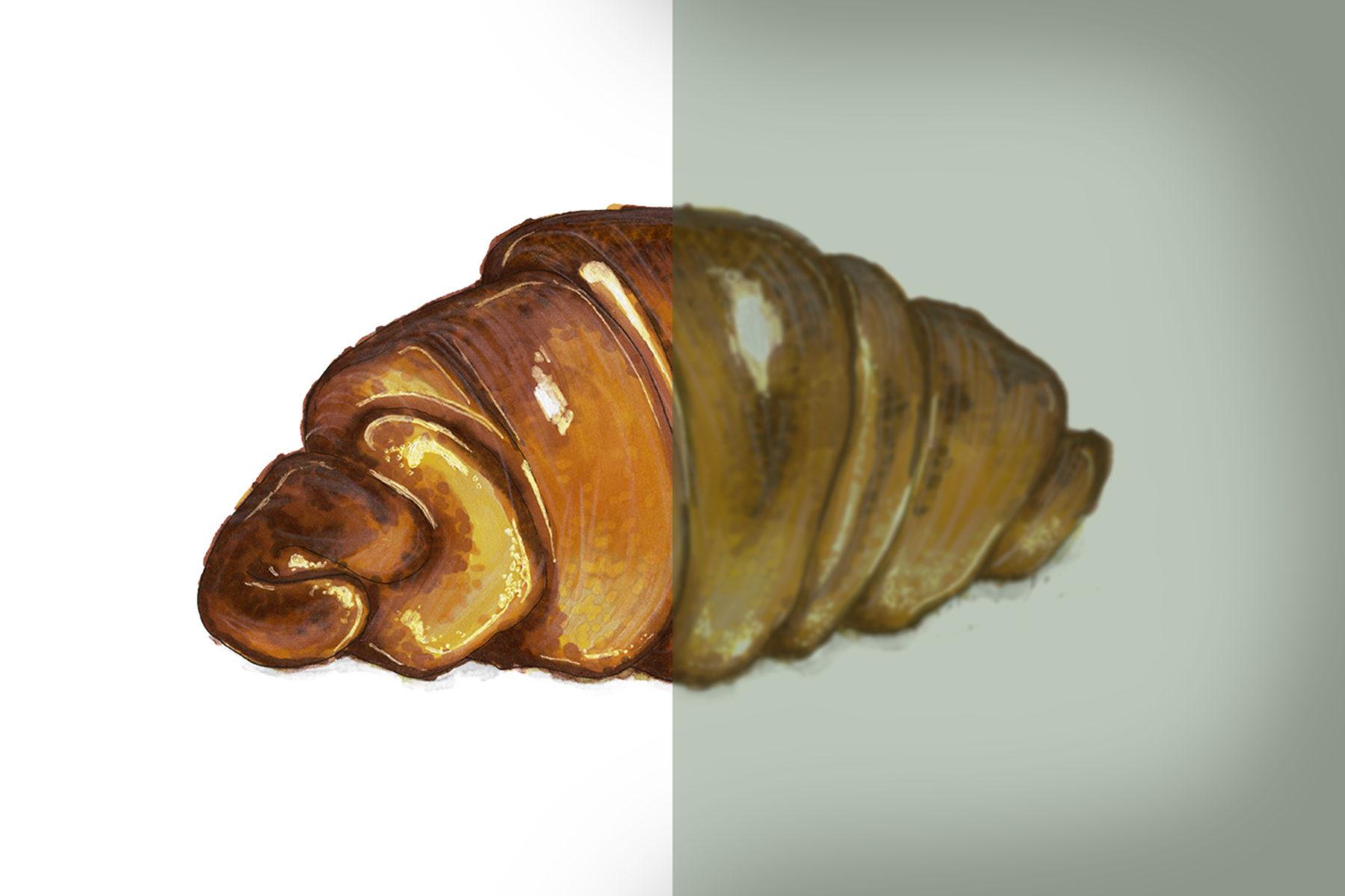 Zeichnung Croissant